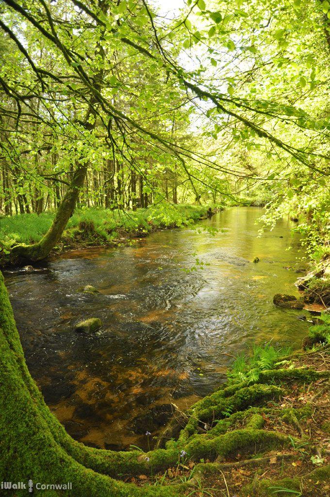 The River Fowey near St Neot, Cornwall