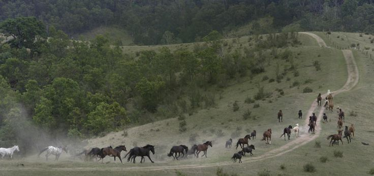 Megalong Australia Heritage Centre... Activities are set on 2000 acres to explore, superb horses to choose from for trail riding, guided walks, 4WD adventures, horse riding lessons.