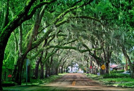 The streets in My Happy Place are all encased in spanish moss, just like Magnolia Ave.  Magnolia Avenue in St. Augustine, Florida has been called one of the most beautiful streets in America. Oak trees covered by spanish moss. I love it!