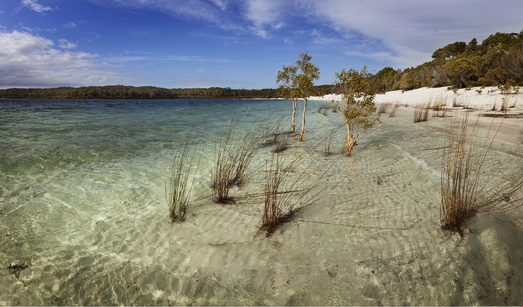 Fraser Island walk