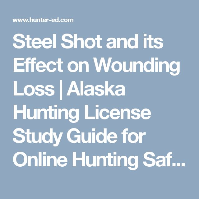 Steel Shot and its Effect on Wounding Loss | Alaska Hunting License Study Guide for Online Hunting Safety Course