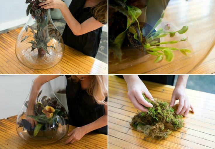 die besten 25 moos terrarium ideen auf pinterest moosgarten terrarienpflanzen und moos farbe. Black Bedroom Furniture Sets. Home Design Ideas