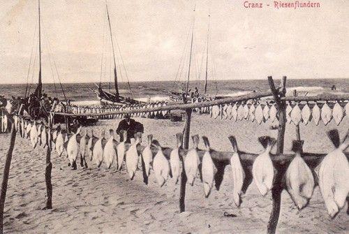 Кранц 1913
