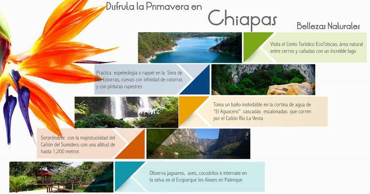 Chiapas es uno de los Estados con mayor diversidad biológica en el mundo. Su variada vegetación, con bosques y selvas dan origen a una flora y fauna única que son uno de los grandes atractivos de la región. Descubre más de este maravilloso destino en: https://programadestinosmexico.com/guia-turistica-de-chiapas.html