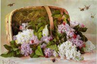 Gallery.ru / Фото #81 - Paul De Longpre - lanaluz