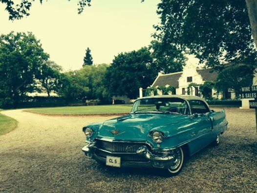This picture was taken during a very special wine tasting trip with four Norwegian clients to Zandvliet Wines. Our American Dream Car trips are becoming very popular - it is a wonderful excursion to add to your itinerary when staying in the Montagu area. Choose between the following: 1956 Cadillac Sedan De Ville, 1955 Mercury Monterey or 1956 De Soto Fireflight Sportsman.