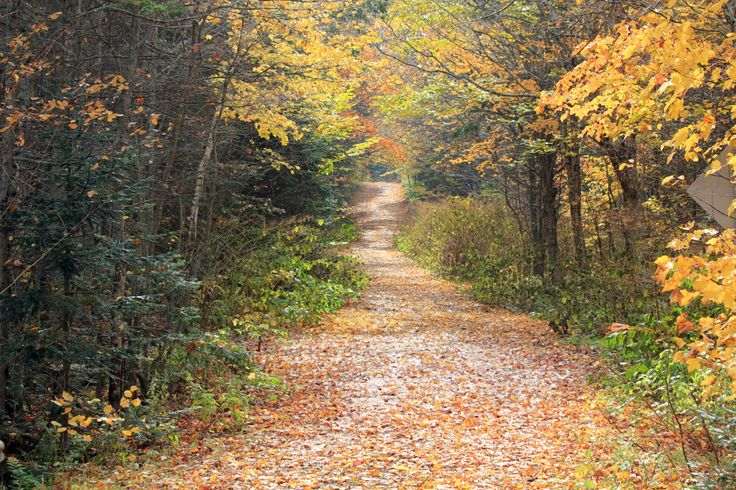 In fall, PEI's scenic heritage roads become palettes of colour that entice walking and cycling along their secluded laneways.