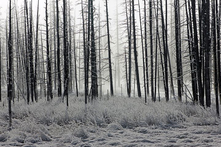 Forest, Frost, Trees, Winter