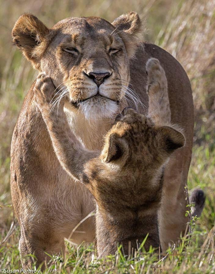 ♔ Lion & cub