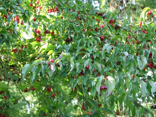 Eine Wildfruchthecke Anlegen Hecke Fruchte Hugelbeet