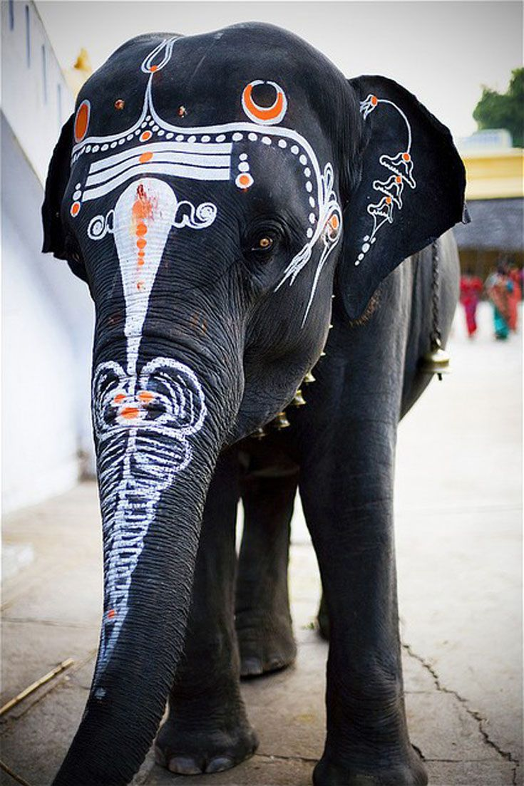 An elephant, which for them is very important.