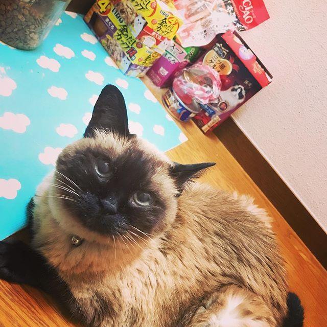 あの~…私のご飯ってまだですか?。。🐟 #猫 #愛猫 #ニャンコ #オネダリ #キャットフード #癒される #可愛い #動物大好き #おばあちゃん猫 #癒し #相棒 #ペット #モフモフ