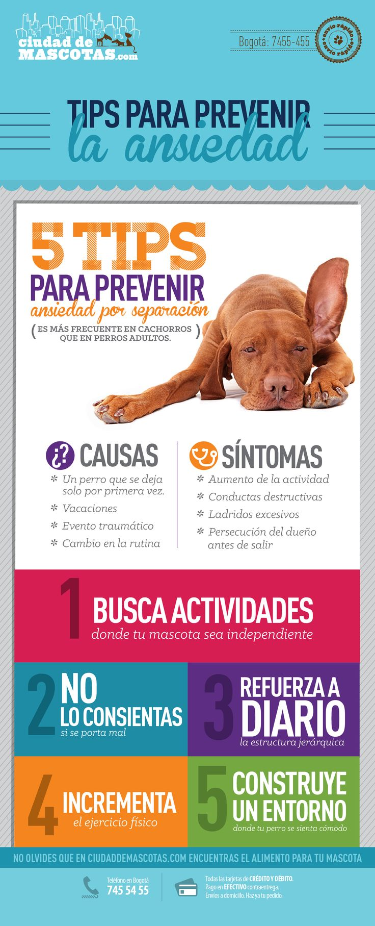 Los perros son animales sociales por esto sufren de ansiedad cuando sus perros los dejan solos. Te damos consejos para evitarlo.