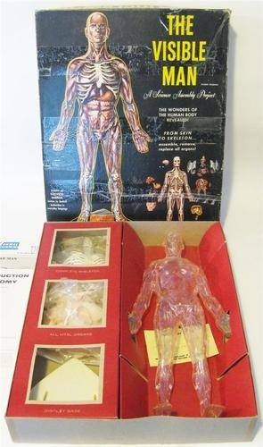 1959 The Visible Man Vintage Renwal Skeleton Model Kit ...