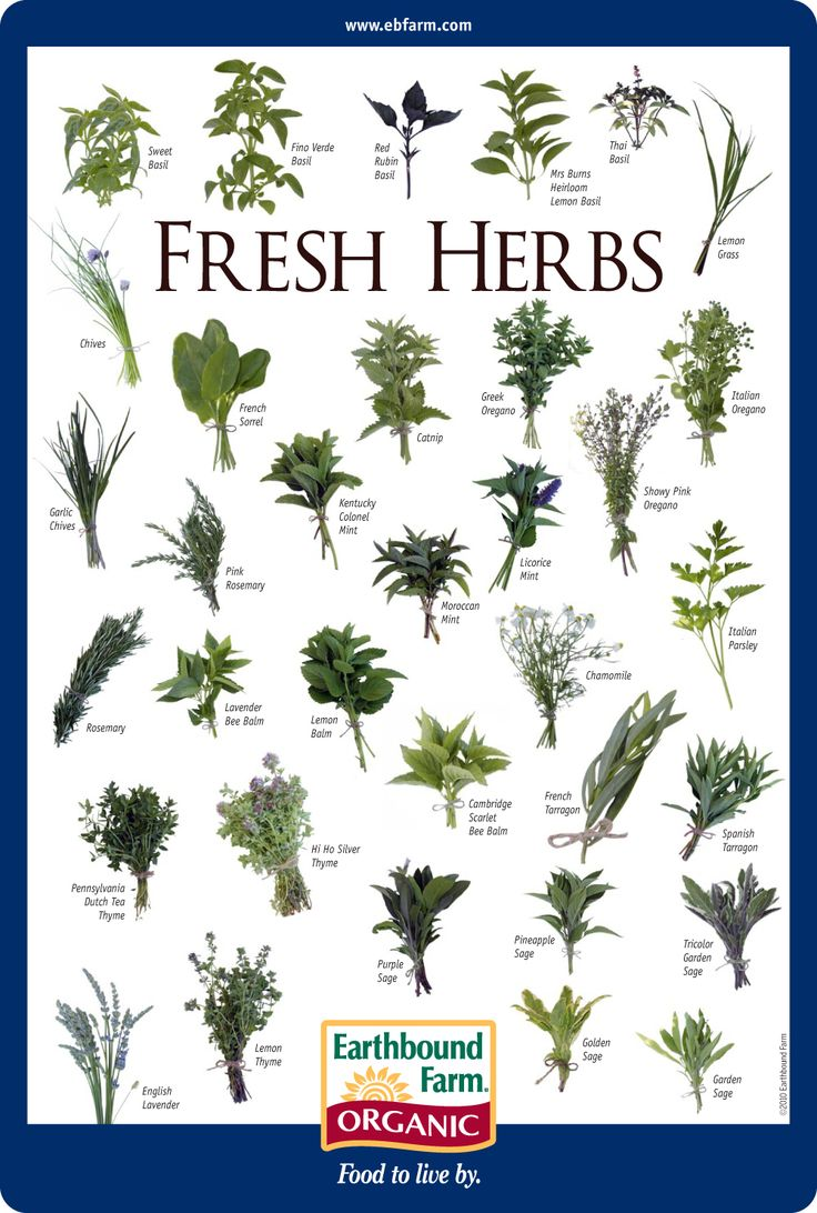 The spice doc edible and medicinal flowers - 341 Best Herbs And Spices Images On Pinterest Plants Herb Gardening And Fresh Herbs
