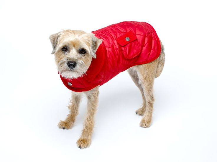 """Fall Barn Coat!  This light weight and water-resistant coat will allow your dog to get into the holidays just like the rest of the family! It is Part of Canine Styles recommendation on how to """"WOW"""" this holiday season. For the more gift-giving Ideas! Bring your dog to the nearest Canine Styles or Shop online 24/7 at CanineStyles.com #CanineStyles #CanineStylesNYC #Holiday #christmas #bestGift #Dogs #dog #dogLovers"""