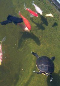 All about turtle ponds