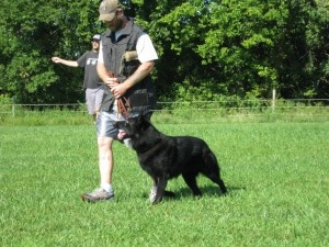 The Original Kansas City Dog WhispererDogs Training, Originals Kansas, Kansas City, Dog Training, Cities Dogs, Dog Whisperer, Kansas Cities, Dogs Whisperer