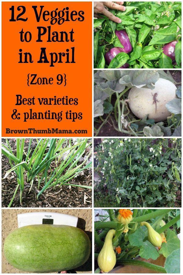 12 Vegetables To Plant In April Zone 9 Planting Vegetables