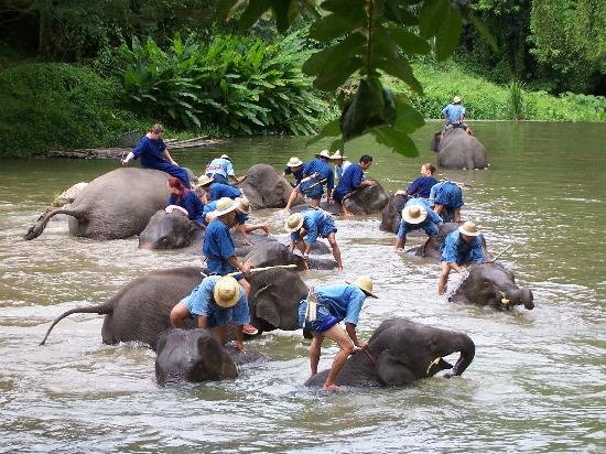 mahout training course lampang