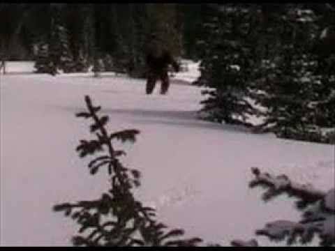 Bigfoot sounds and pictures