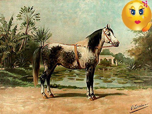 #cool A rare and finely rendered portrait of a noble draft #horse, from the limited Dutch edition of Eerelman's 'Paardenrassen Kunstalbum'. (Album of Horses). A ...