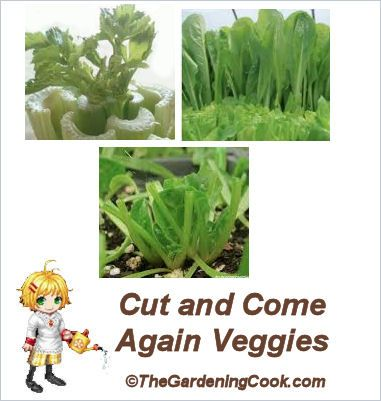 Many of these vegetables can be grown both inside and also can be used as cut and come again vegetables in the garden bed too.  Just cut the...