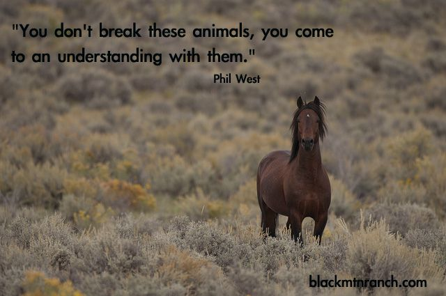 """You don't break these animals, you come to an understanding with them."" ~ Phil West"