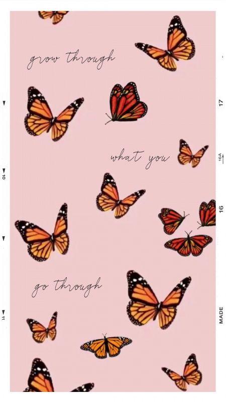 olimpiaporebski | Butterfly wallpaper iphone, Iphone ...