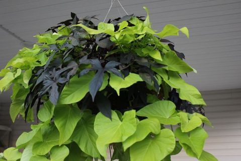easy fall hanging baskets that you plant in spring, gardening, Gorgeous Fall Color