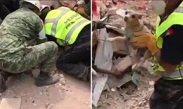 Heart-warming moment puppy is rescued from Mexico earthquake wreckage