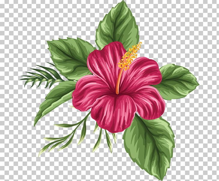 Flower Drawing Tropics Png Annual Plant China Rose Chinese Hibiscus Clip Art Color Flower Drawing Hibiscus Flower Drawing Hibiscus Clip Art