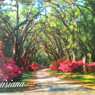 Louisiana Scenery | Home Sweet Home | Pinterest ...