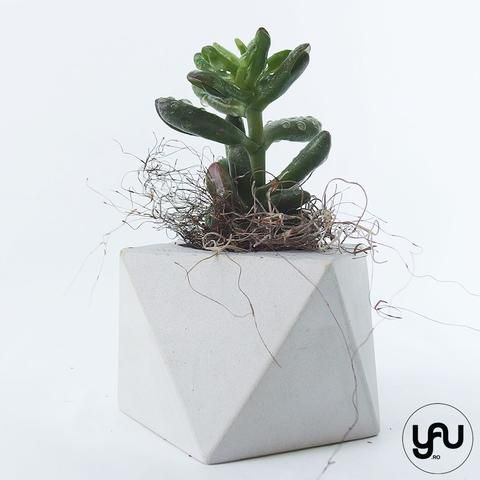 Marturii plante suculente in suport turnat GEOMETRIC- M36 - https://www.yau.ro/collections/marturii-nunta-si-botez?page=1 - yauconcept - elenatoader
