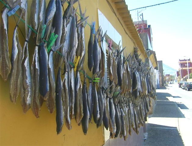 En La Línea, en el Campo de Gibraltar, acaba de comenzar la temporada de los Volaores. Os aconsejo daros una vuelta en estos días por el barrio de La Atunara y vereis el espectaculo de los pescados secos colgados por las calles. Todos los detalles en cosasdecome. http://www.cosasdecome.es/sin-categora/comienza-en-la-linea-la-temporada-de-los-volaores/