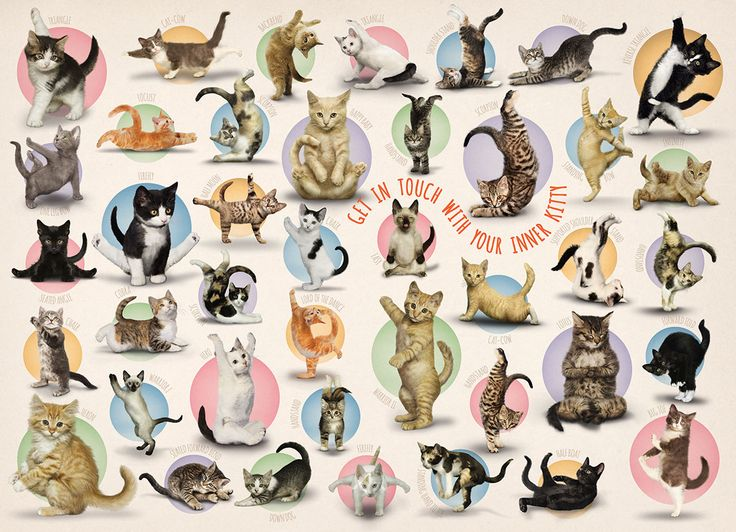 """Yoga Kittens. Family puzzle. 300 large size pieces. Discover some of the basic yoga positions with the help of your purring friends. Finished Puzzle Size: 19.25"""" x 26.5""""."""