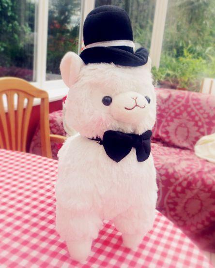 Kawaii Wedding Arpakasso / Alpacasso/Llama 38cm tall (Groom, White)  #Alpacasso