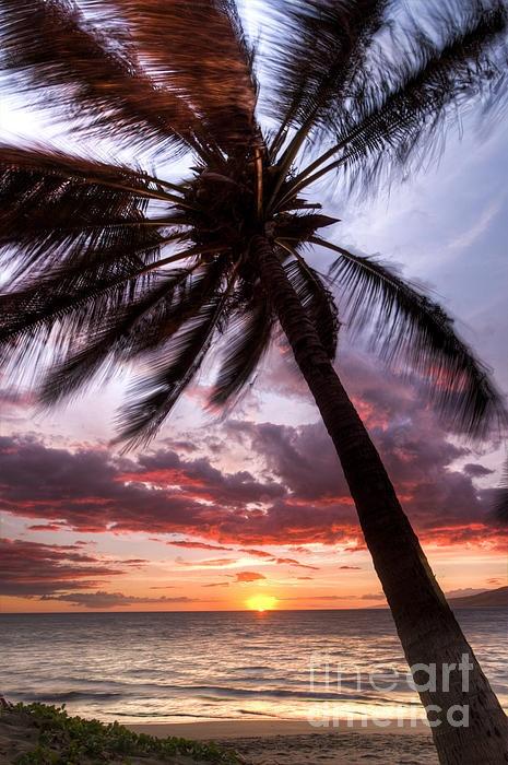 Hawaiian Coconut Palm Sunset