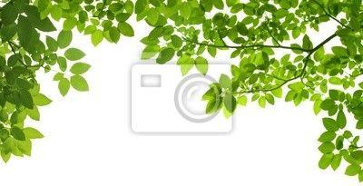 Fotobehang panoramisch Groene bladeren op een witte achtergrond