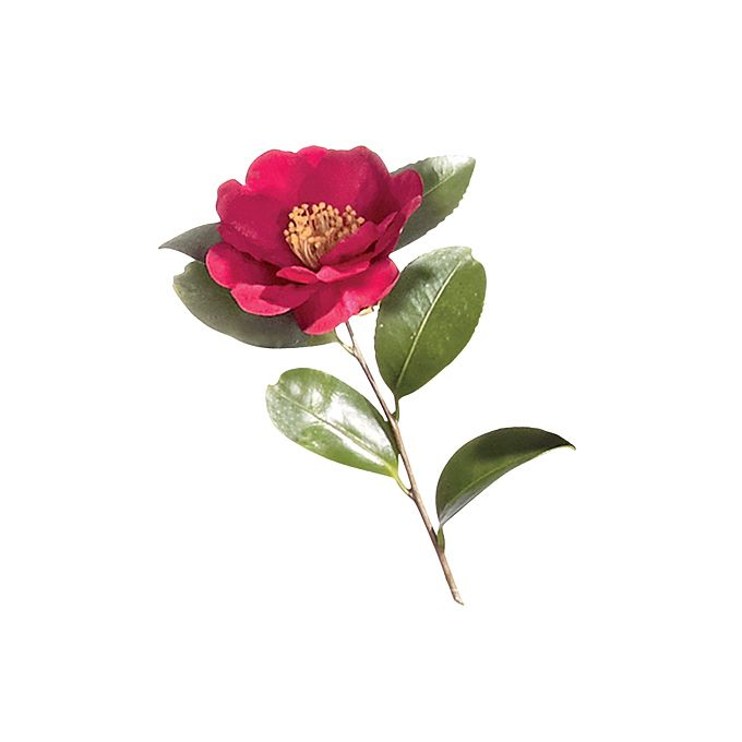 Brides.com: A Glossary of Wedding Flowers by Color. Camellia. This glossy-leafed branch blossoms in winter and spring only. It also comes in pink, soft pink, and white.  Browse more red wedding flower ideas.