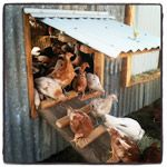 Our Story : Taranaki Farm & the Big Picture