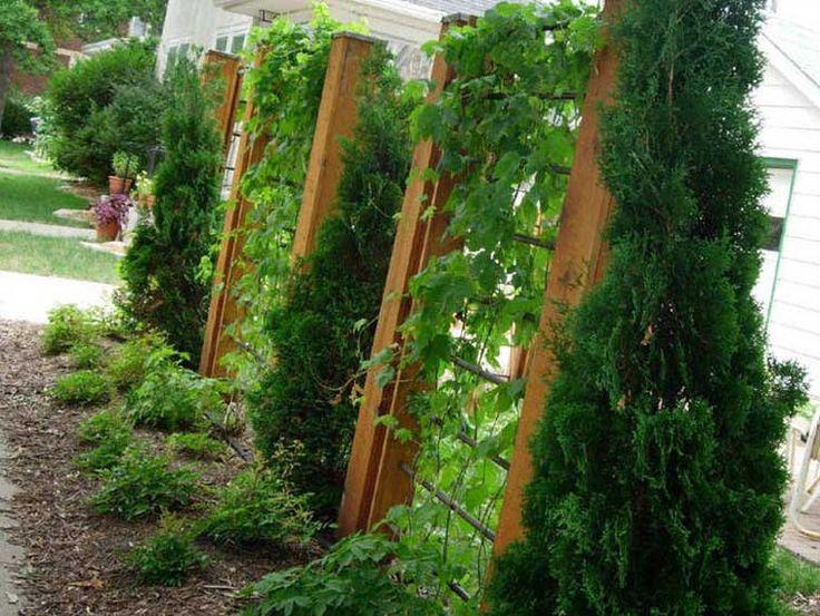 Beautiful Vegetable Garden Design Front Yards