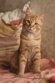 Handsome, orange and tabby. My kind of cat.