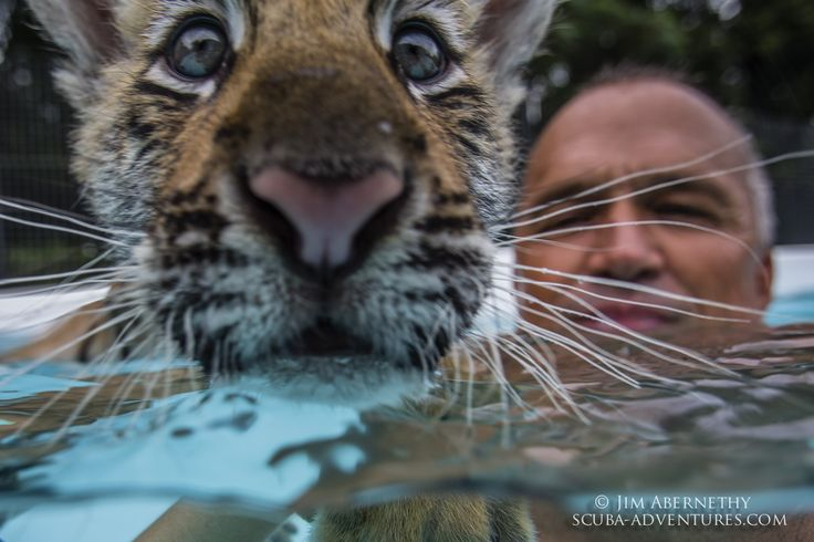 Dade City's Wild Things - Swim with A Tiger Photo Session
