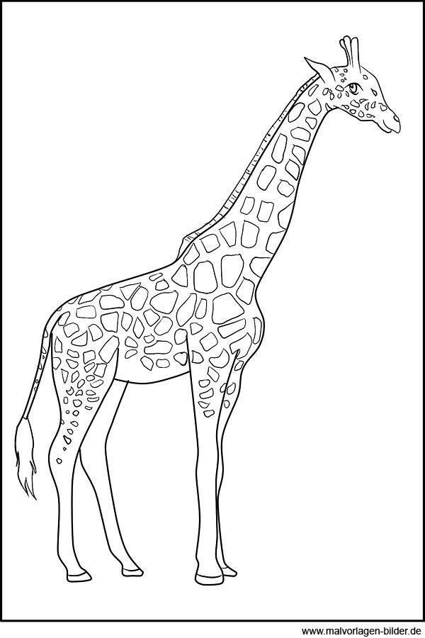malvorlage giraffe  ausmalbilder tiere ausmalbilder