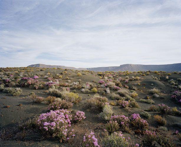 mpdrolet:  Tanqa National Park, Karoo, South Africa David Chancellor