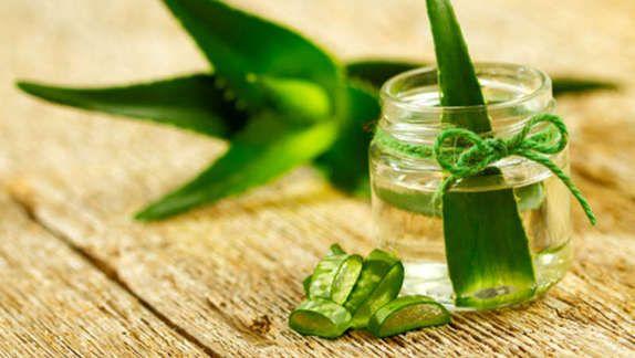 Die Vorzüge der Aloe vera - Sie wirkt krebshemmend. - Sie reguliert den Blutzuckerwert. - Stärkt die Hautgesundheit - Lindert Arthritisschmerzen - Verbessert die Qualität der Luft.