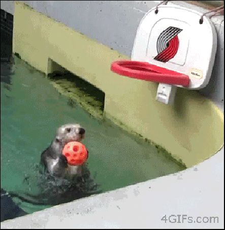 Seals Victory with a Dunk.. COOL! #Animals #Funny