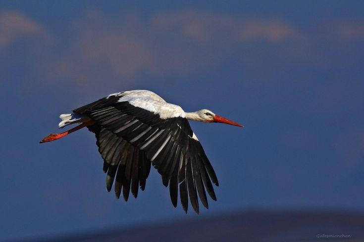 TRAKUS Türkiye'nin Anonim Kuşları - Kuşlar Kuş türleri Detaylı bilgiler
