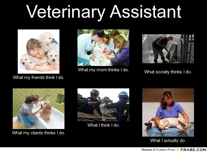 Veterinary Assistant - What I Actually Do.  Seems like a more plausible career choice at the moment.